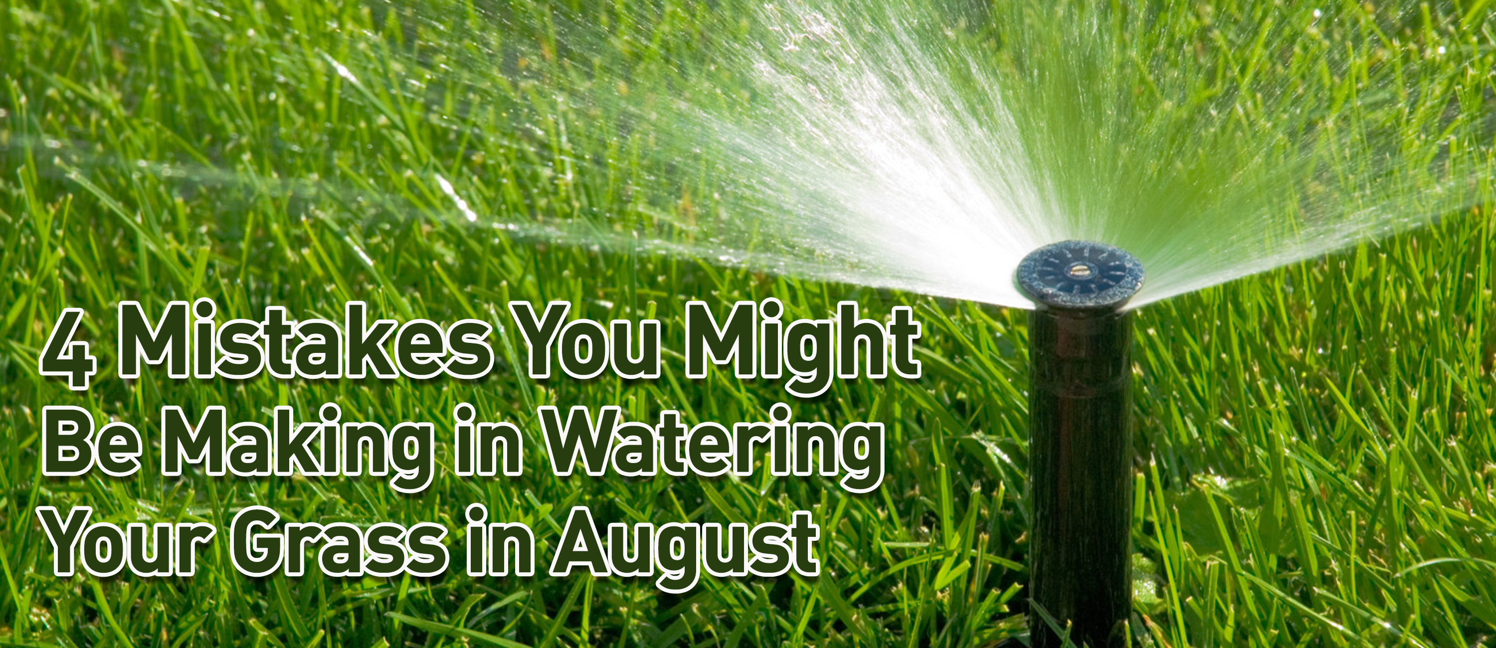 Watering Your Lawn In August